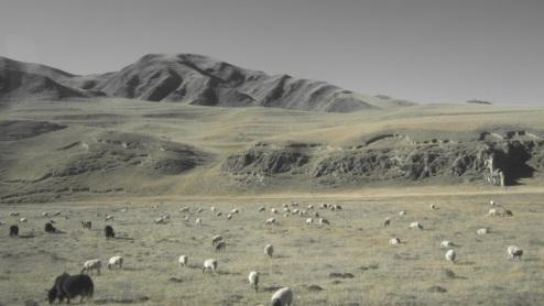 pastoral paradise, high sheep/yak meadows Gansu, Tibet