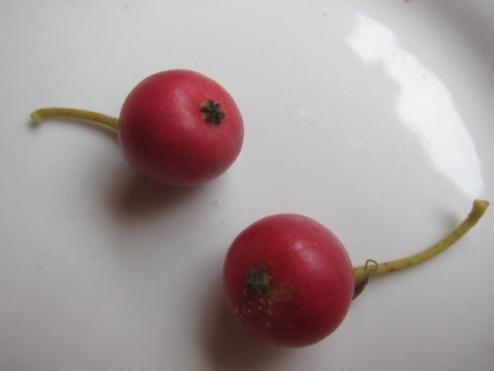 Jamaica cherries