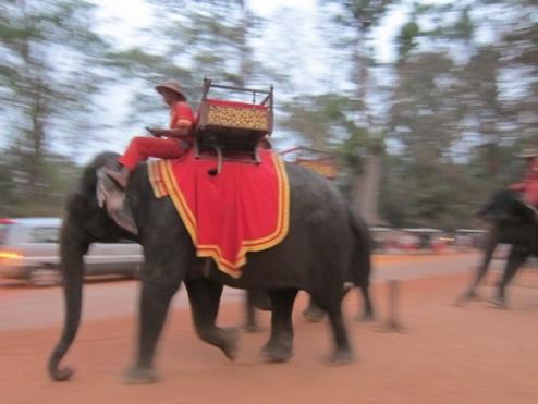 Richie's remarkable elephant photo