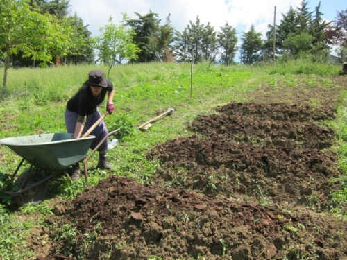 Me WWOOFing in Central Italy - labors spent in service of anthers' garden